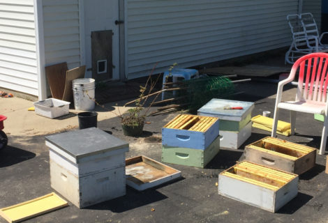 Hiving Bees and a Day In Pictures